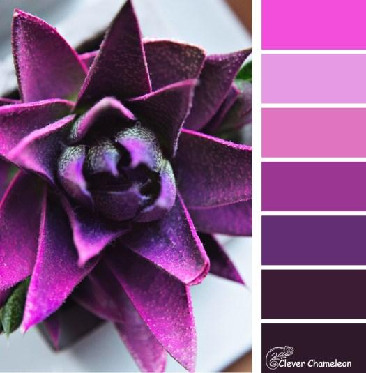 Vibrant Violet colour scheme by Clever Chameleon