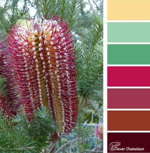 Banksia Bonanza color scheme from Clever Chameleon