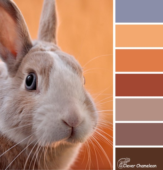 Wabbit Season colour board at Clever Chameleon.