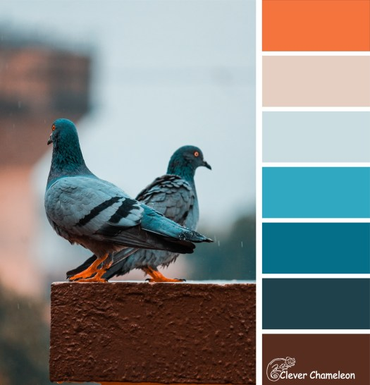 Blue Pigeons colour board at Clever Chameleon