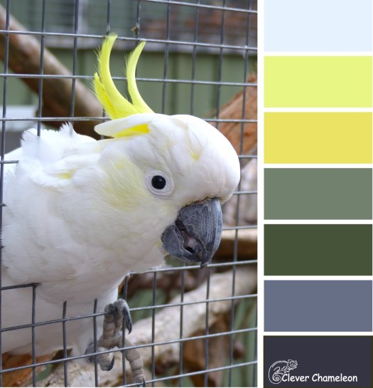 Claude the cockatoo color scheme at Clever Chameleon