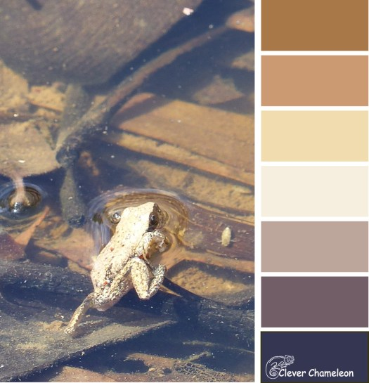 Little Arkaroola Frog colour board at Clever Chameleon