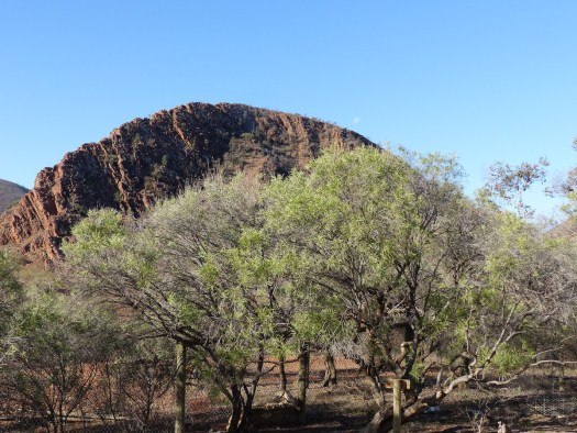 Arkaroola in June