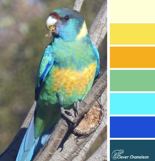 Mallee parrot colours at Clever Chameleon