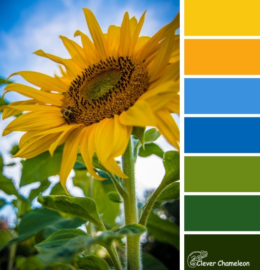 Sunflower colour board