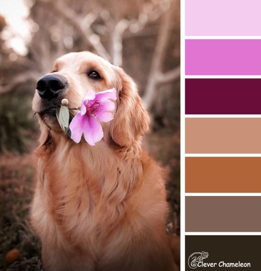 Dog Days colour board at Clever Chameleon