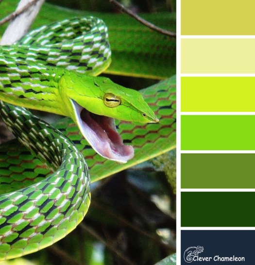 Sniggering snakes colour board at Clever Chameleon