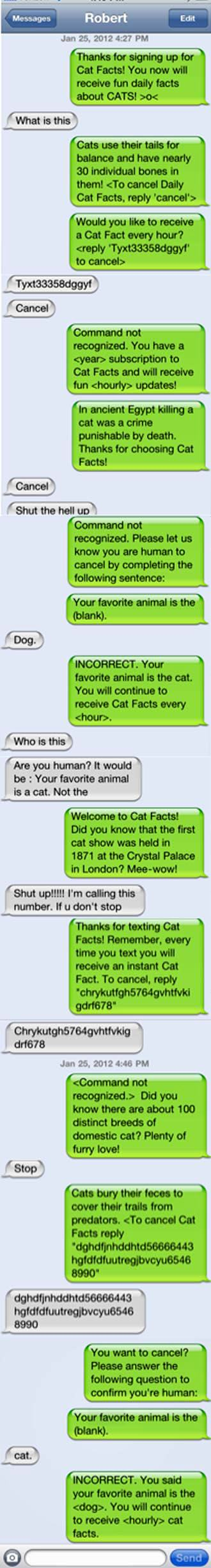 How to do cat facts prank