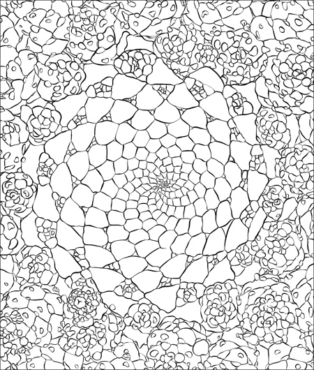 sensational succulents an adult coloring book of amazing shapes and magical patterns - Coloring Book Patterns