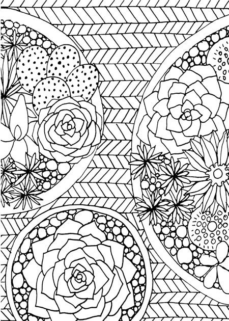 Best Succulent Cactus Coloring Books Pages Cleverpedia
