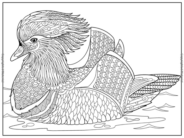 Hottest New Coloring Books: February 2018 Roundup