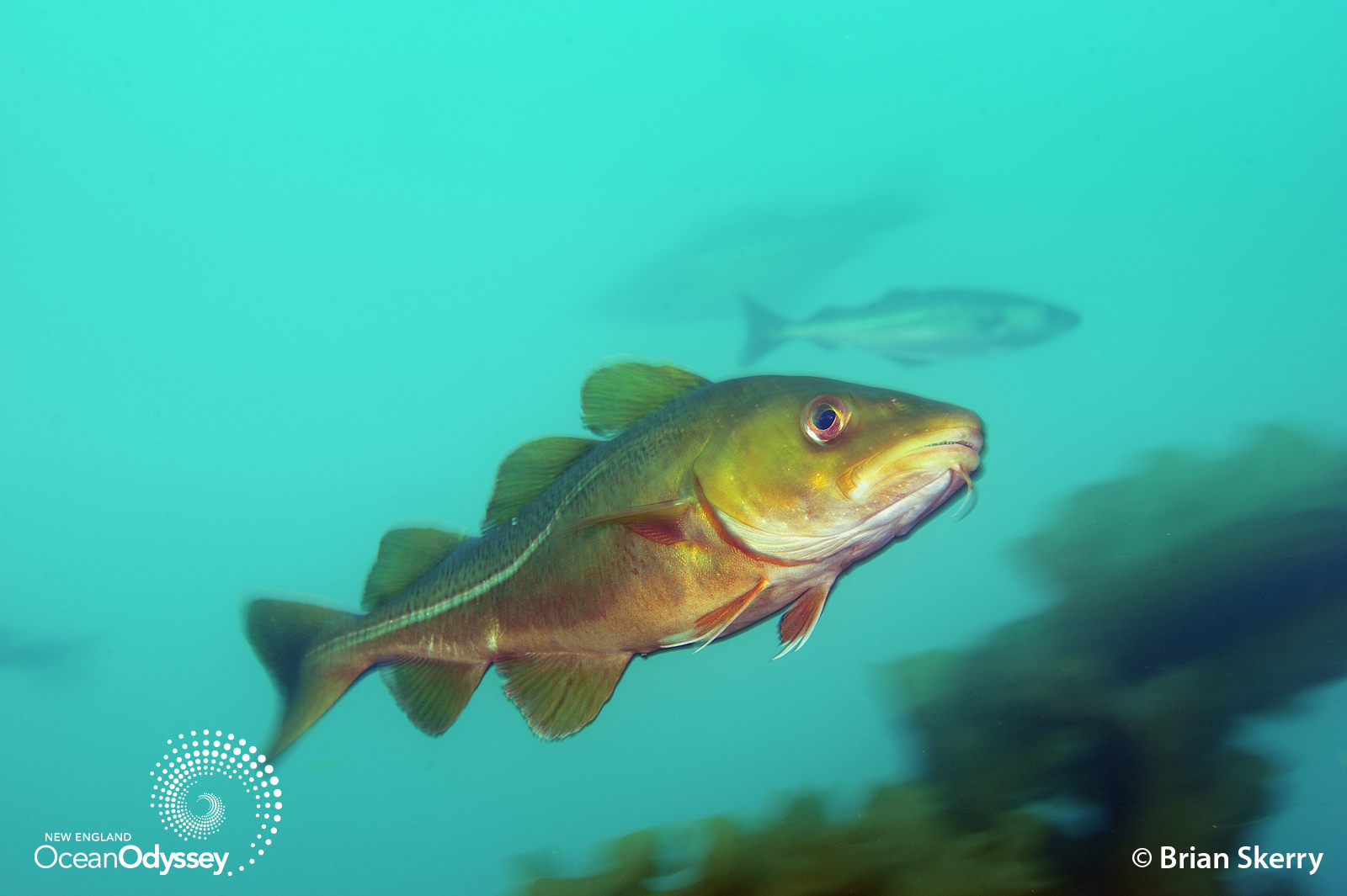 Seafood For Thought Fish Need Homes Too Conservation