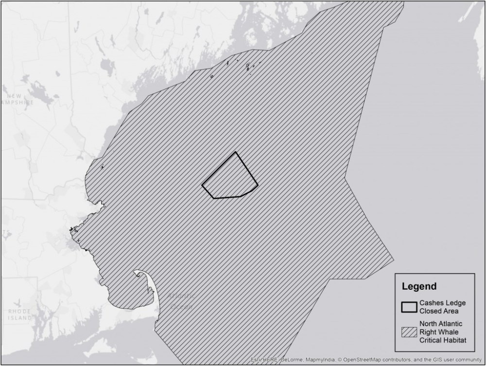 medium resolution of right whale critical habitat
