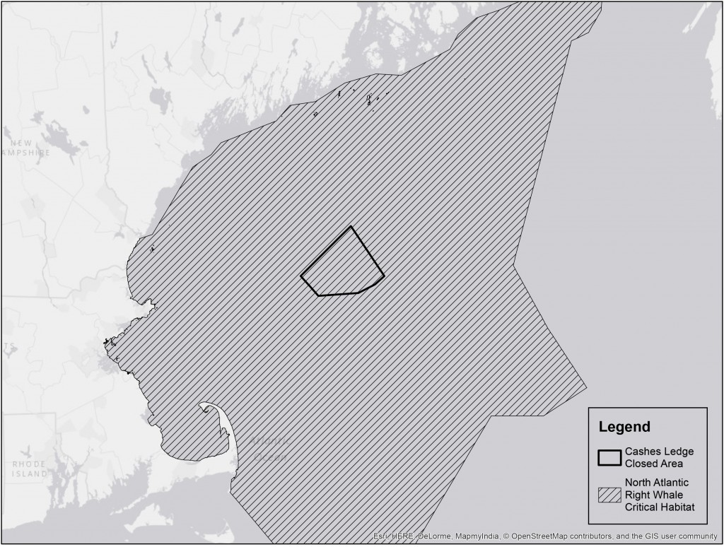 hight resolution of right whale critical habitat