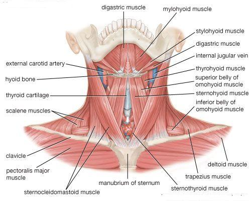 diagram lymph nodes on back of head 2006 ford taurus wiring collo - cliccascienze