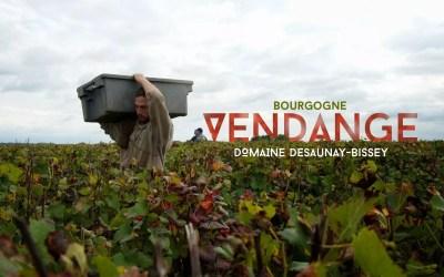 Vendanges en Bourgogne | Domaine Desaunay-Bissey