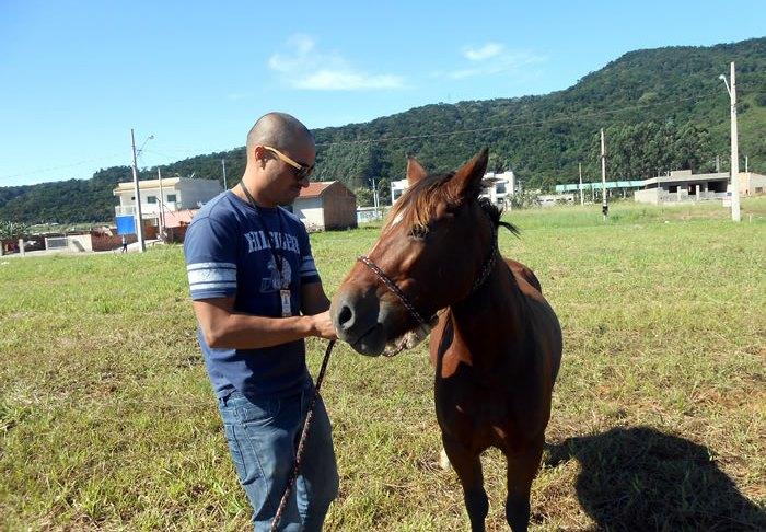 cavalo recolhido