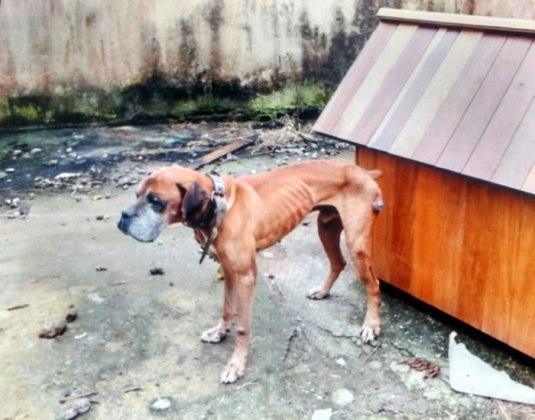 cachorro rua amazonas 2