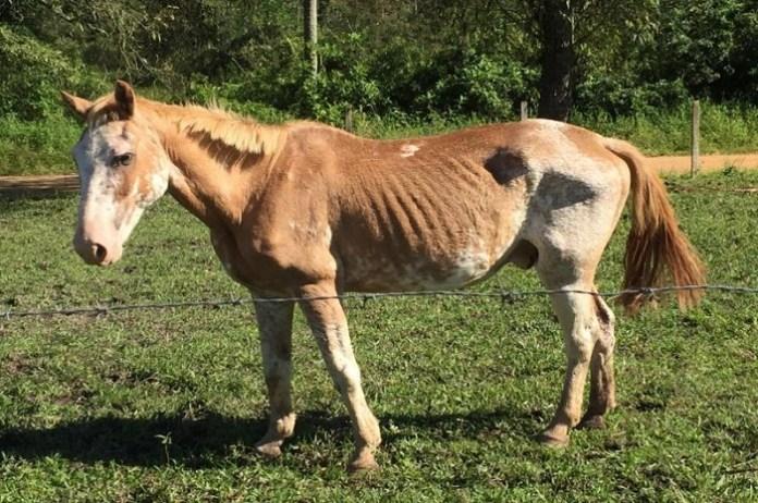 Cavalos furtados na UAPA estão disponíveis para adoção