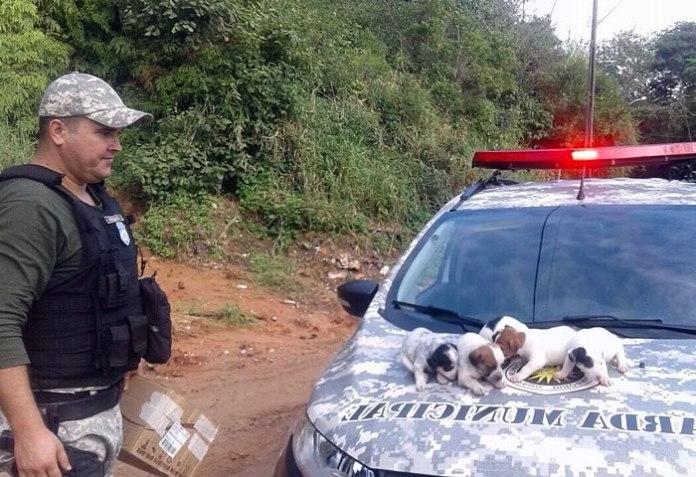 Filhotes de cachorro abandonados são resgatados