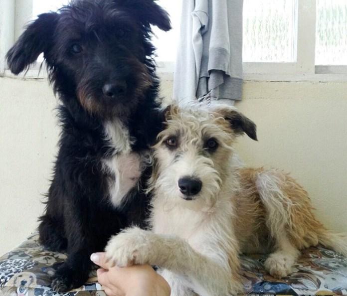 Sábado tem Feira de Adoção de cães e gatos na Praça das Figueiras