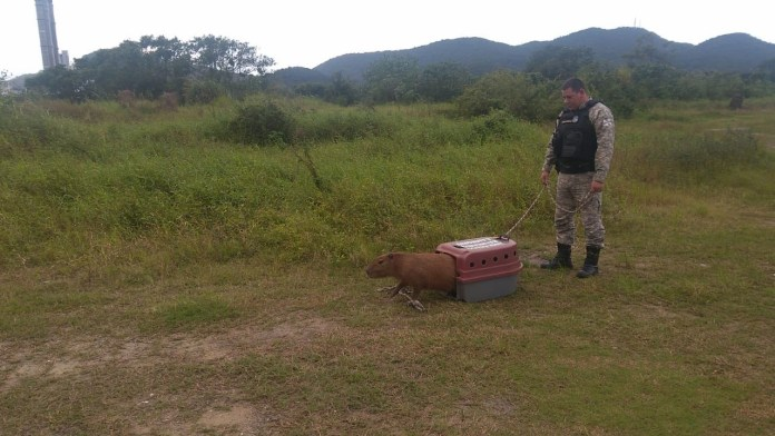 Mais de 100 animais silvestres foram resgatados via programa ABRAÇO Animal