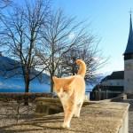 gatto entra in chiesa
