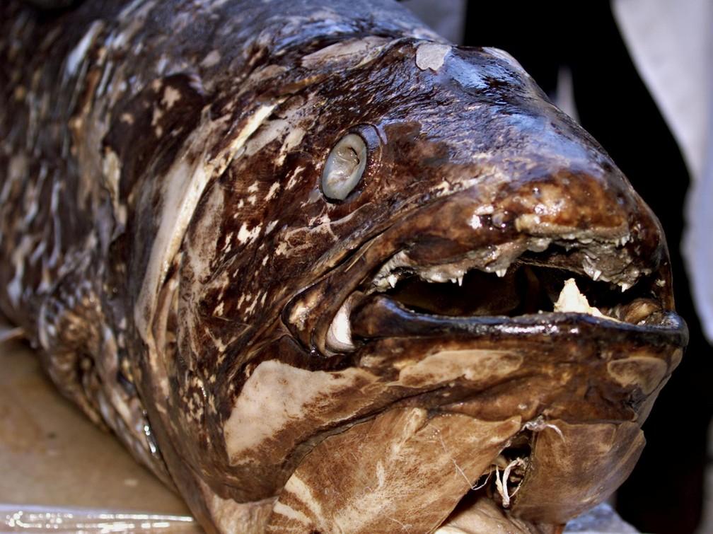 2021-06-18t130616z-81640448-rc213o9pwj0r-rtrmadp-3-science-coelacanth Espécie de peixe que já foi considerada extinta com os dinossauros pode viver por 100 anos e ainda está na Terra