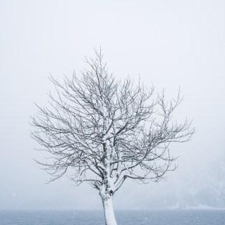 Winterfeeling