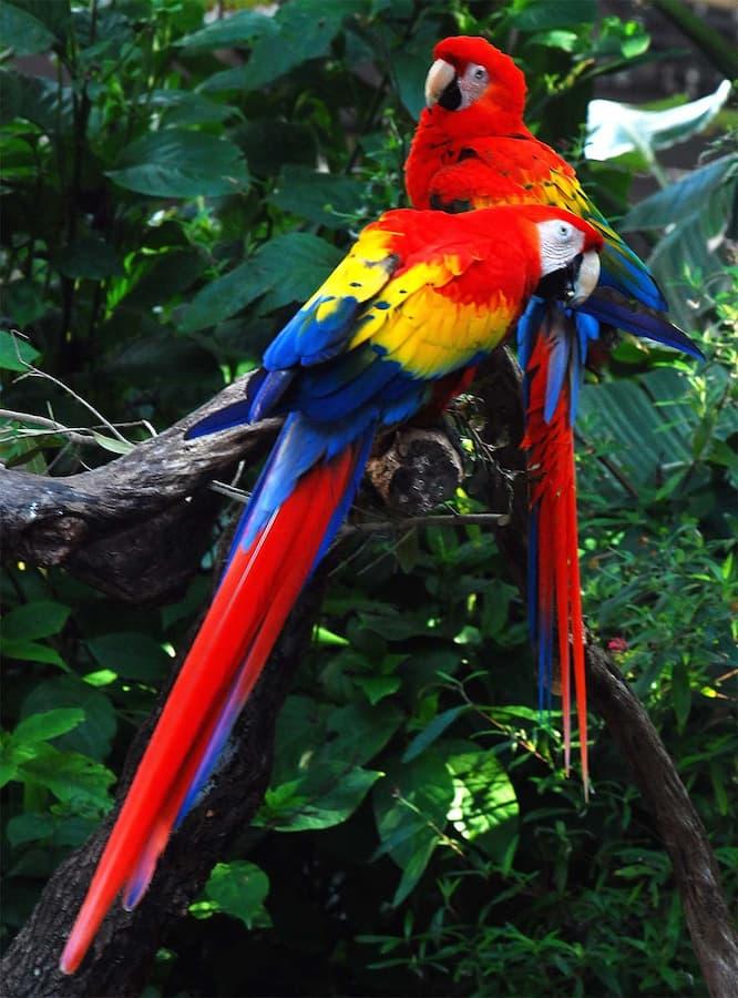 The Amazon Rainforest