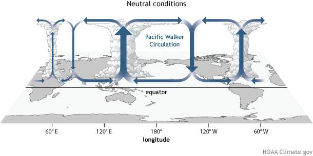Walker Circulation - ENSO Neutral