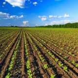 Agricoltura biologica v/s agricoltura convenzionale: vantaggi e svantaggi