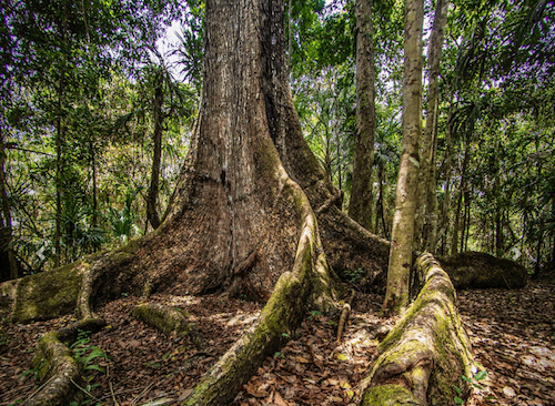 Better Agency Coordination is Needed to Protect Forests and Improve Land Management in Mexico