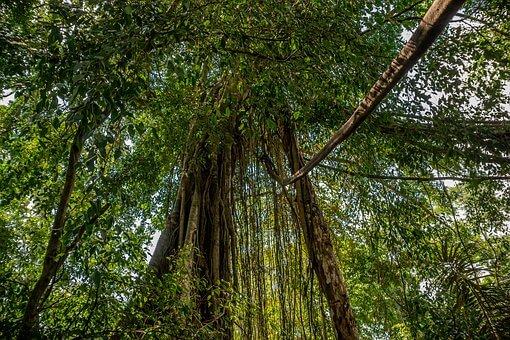 COVID-19 Sets Back Indonesia's Progress on Climate Change Mitigation Goals