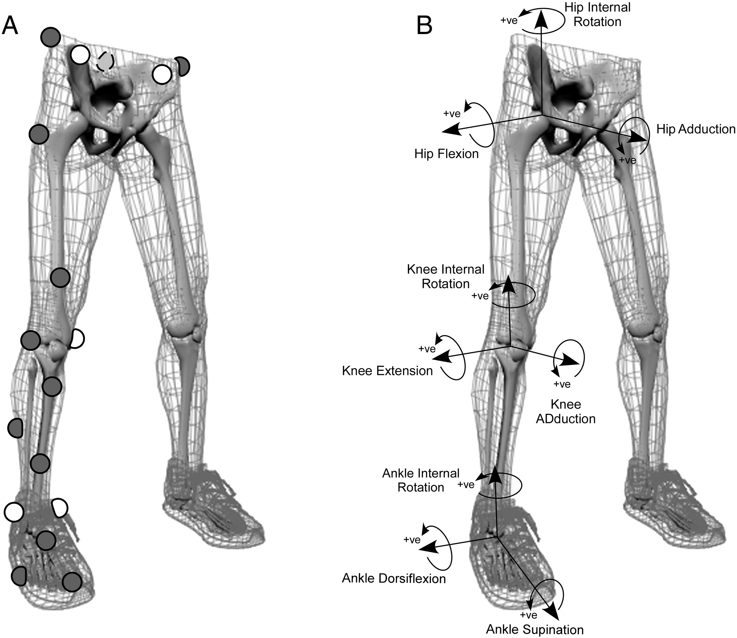 Knee Joint Anatomy Predicts High Risk In Vivo Dynamic
