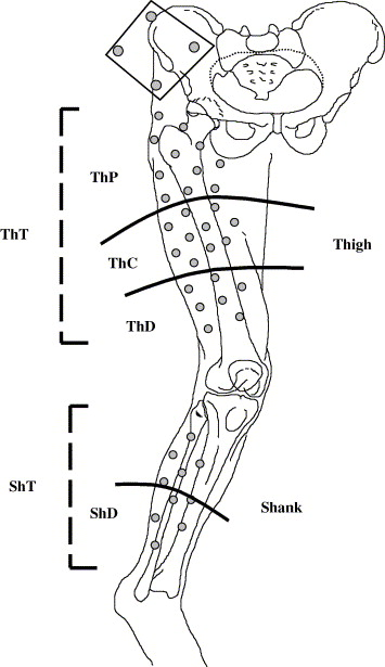 Quantification of soft tissue artefact in motion analysis