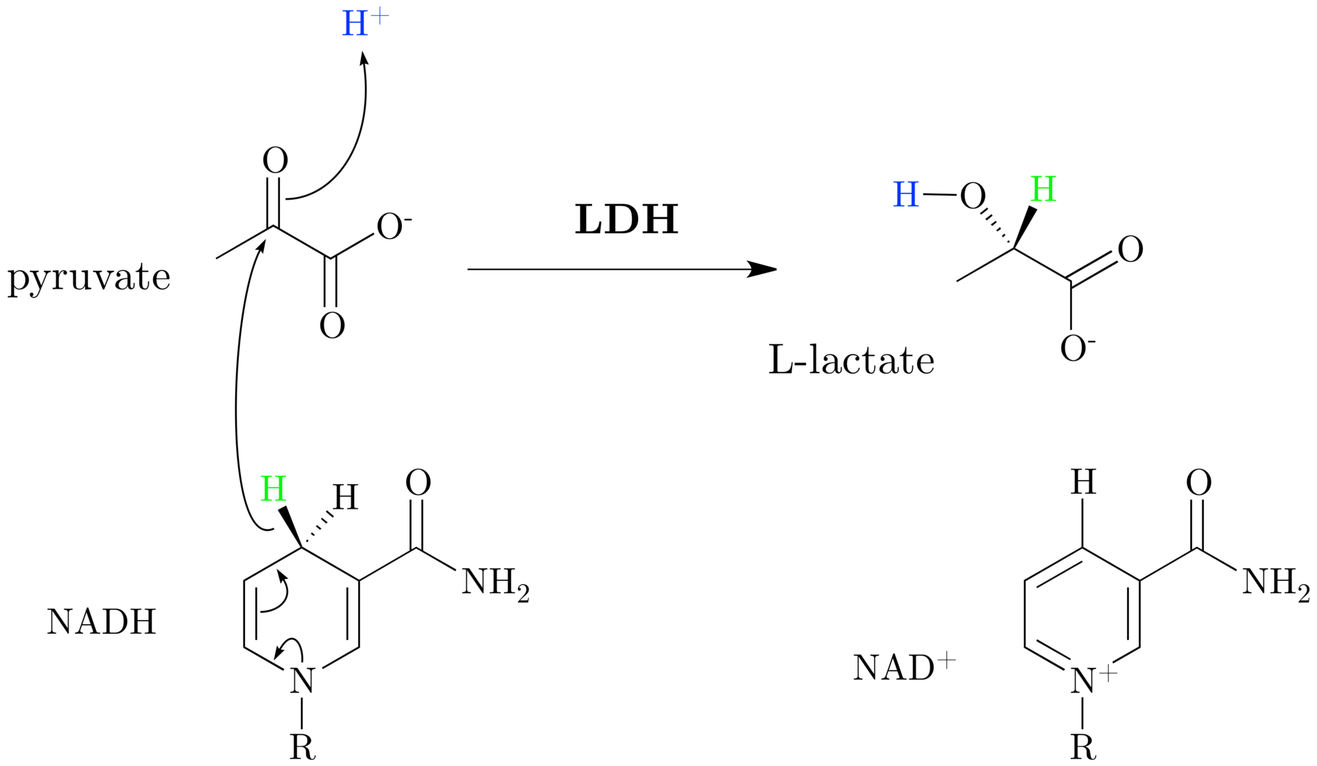 How to Interpret an Elevated Lactate on the Inpatient