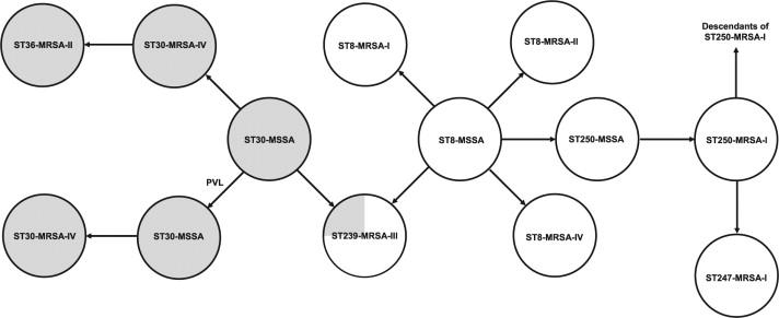 The molecular evolution of methicillin-resistant