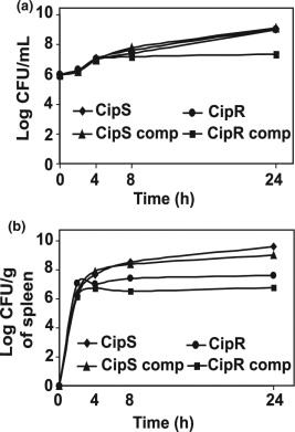 In vitro and in vivo reduced fitness and virulence in