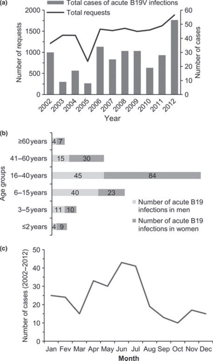 Increased incidence of acute parvovirus B19 infections in