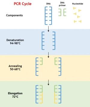 Conventional PCR Generon