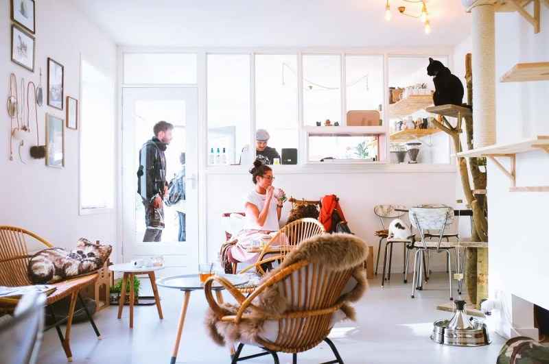 Amsterdam cat cafe | The Best Places To spend Halloween in Amsterdam | Clink Hostels