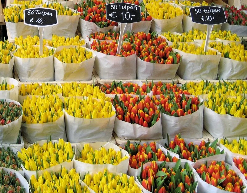 Bloemenweelde Amsterdam Must Visit Places / Things to do during the Tulip Festival in Amsterdam and beyond Clink Hostels