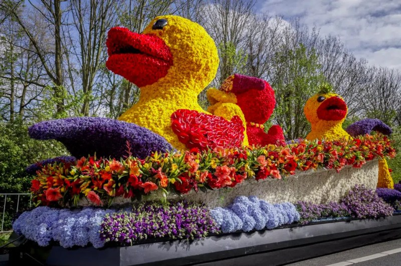 Flower parade Amsterdam Must Visit Places / Things to do during the Tulip Festival in Amsterdam and beyond Clink Hostels
