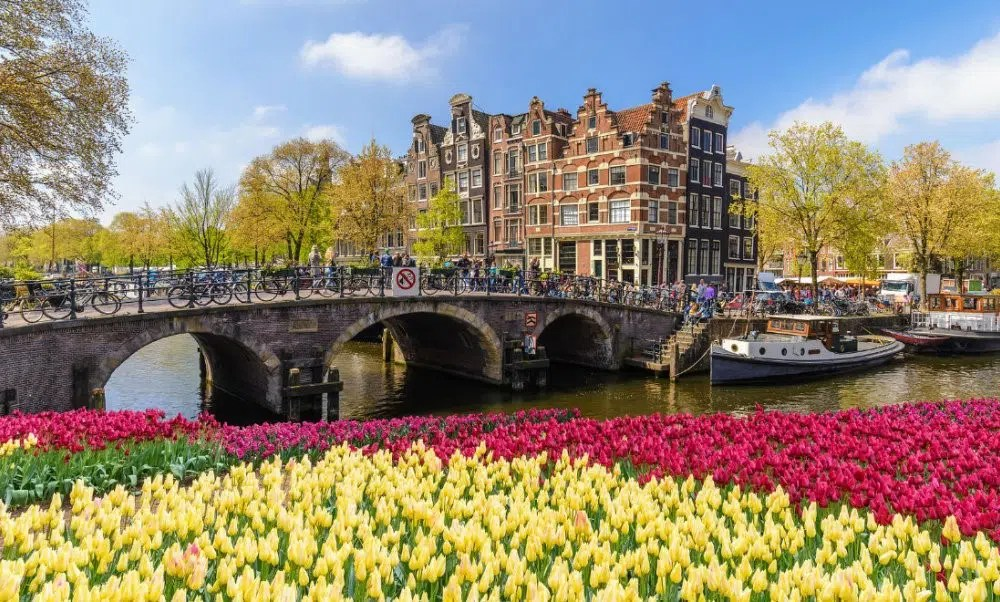 Amsterdam Tulips Top Things to do over Easter in Amsterdam Clink Hostels