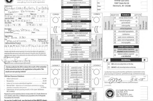 Clinton Oaks » Golden Retriever Health Clearances