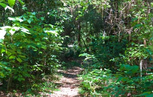 Lone Star Hiking Trail Thru-Hike Redux: Some Changes