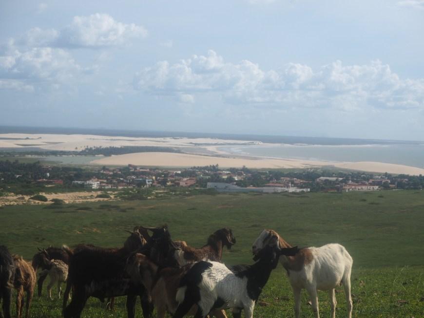 Balada à Jericoacoara, Ceara, Brésil. Des chevres