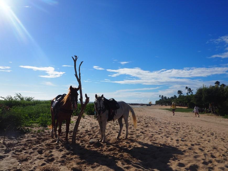 Balade à cheval, Jericoacoara, Ceara, Brésil