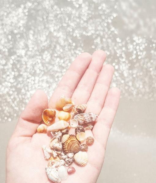 Coquillages de Corse. Instagram Clioandco. Souvenirs de Corse
